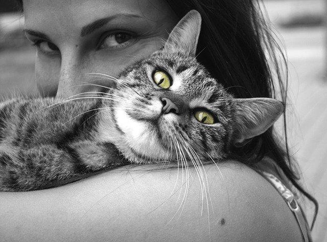 chat proche de sa maitresse